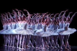 australian ballet swans swan lake