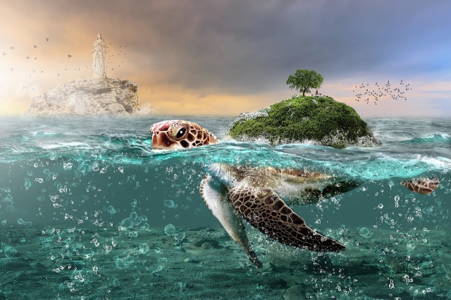 Land on top a turtle's back, image by Imagine_Images on https://pixabay.com/en/water-sea-nature-summer-ocean-3184711/