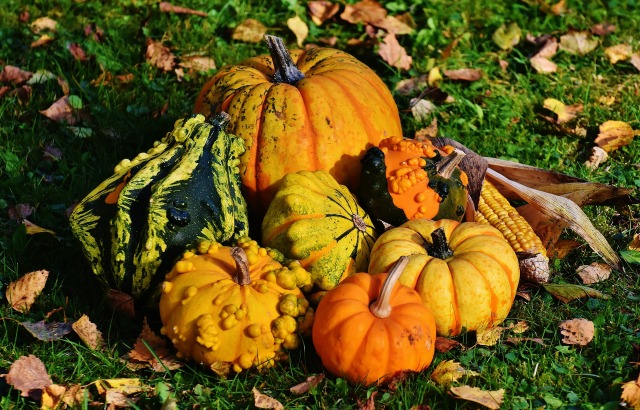 Pumpkin and other decorative squashes by Alexas_Fotos on https://pixabay.com/en/pumpkins-decorative-squashes-nature-1712841/